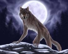47271-werewolves-girl-werewolf