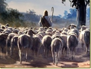 sheep-following1