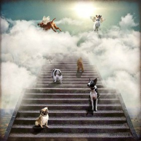 12.11.14-Pope-Francis-Says-All-Dogs-Go-to-Heaven1
