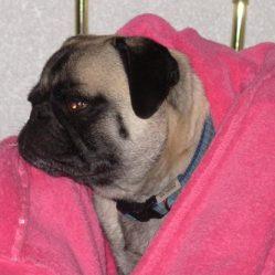 Jasper in my robe