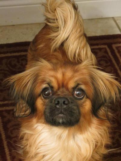 Parker- Cute Face :)
